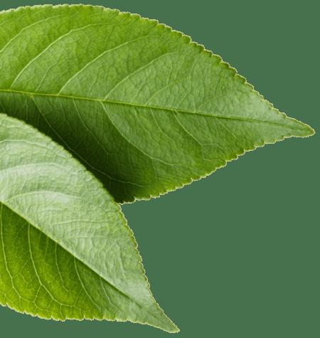 leaves-3